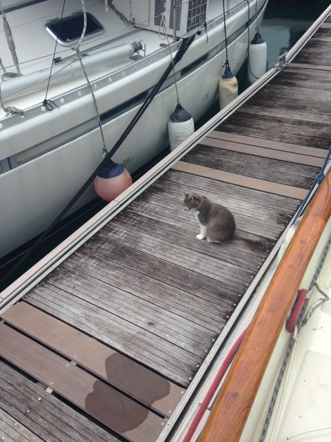 Ready to inspect a new boat arrival