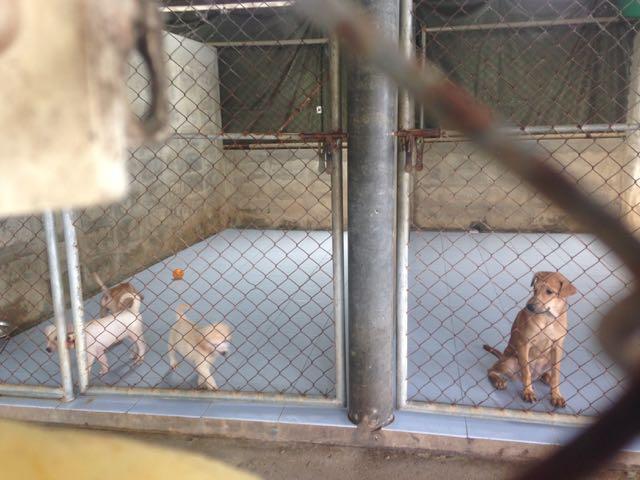 Puppies :)